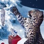 Bijoux Winter TaleCartier