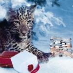 Love Cartier