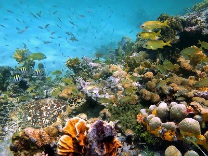 Fond marin et corail