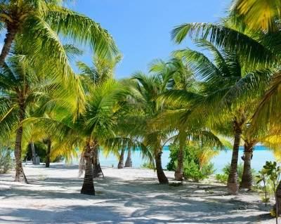 Palmiers a cote tropicale de Bora Bora